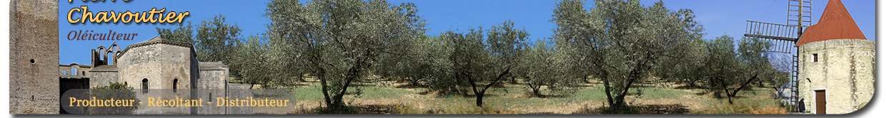 Tradition Olive - Huile d'olive bio